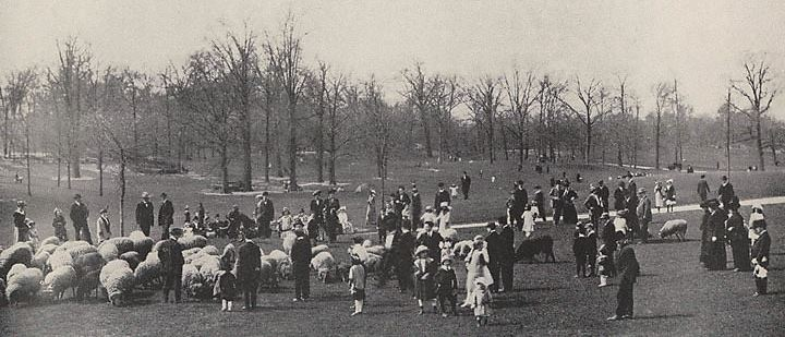 Sheep Meadow (now part of Central Park) in New York; courtesy NY municipal archives